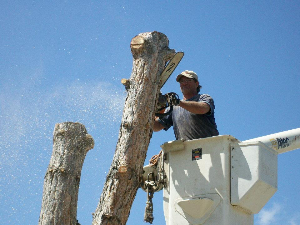 Dead tree branches causing damage to your home?